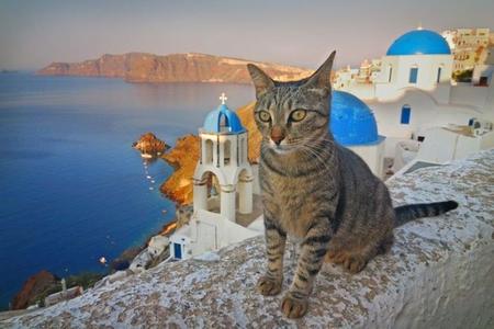 Pourquoi y,a,t,il des chats dans toute la Grèce ? Qu\u0027est,ce que le chat mer  Égée et quelle est l\u0027ile aux chats en Grèce dont on parle si souvent ?